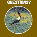 Answers From Animals