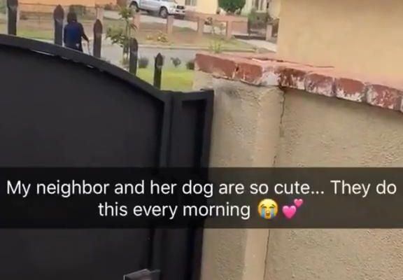 my neighbor holds her dog's hand every morning while she waters her plants and it melts my heart 😩