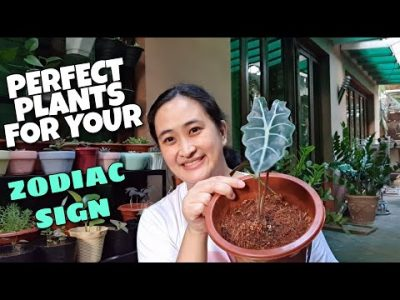 HALAMAN NA PERFECT SA INYONG ZODIAC SIGN ALAMIN ||  PLANTS THAT PERFECT FOR YOUR ZODIAC SIGN